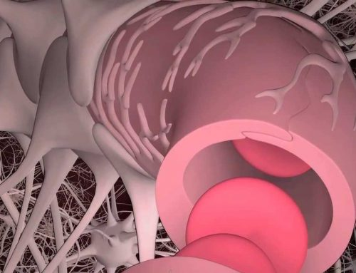 Bloccare una proteina per recuperare il declino cerebrale