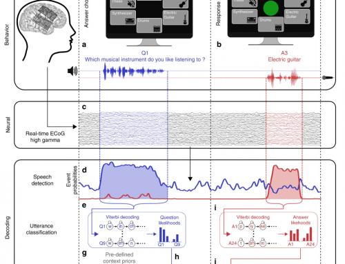 Un decoder traduce attività neurale in parole in tempo reale