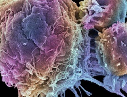 Tumori, scoperta la molecola che blocca la crescita: su quali può intervenire, svolta rivoluzionaria