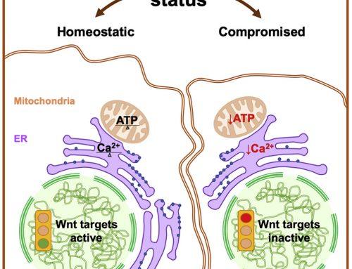 Tumori: scoperto meccanismo per il controllo della proliferazione cellulare