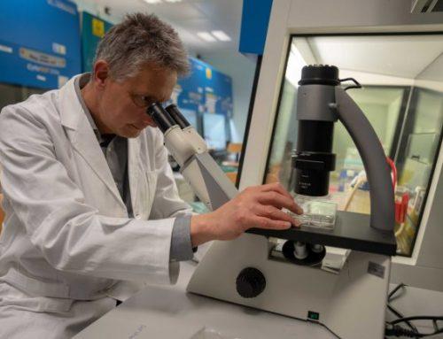 La scoperta: anche il cancro resiste ai farmaci come i batteri