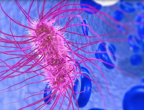 Infarto, svelata la complicità di un batterio intestinale